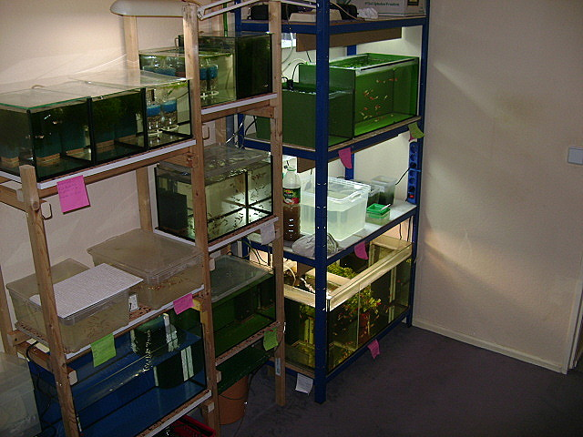 ausschnitte meiner zuchtanlage zuchtanlagen ein aquarium forum aus dem osten ohne grenzen. Black Bedroom Furniture Sets. Home Design Ideas